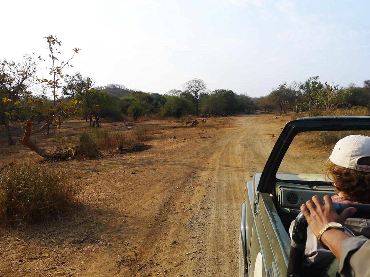 Safari Sasan Gir