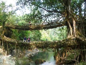 10Lebende Wurzelbruecke des Khasi Volkes, Meghalaya