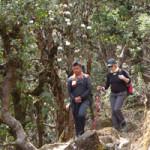 durchRhododendrenwälder300x200